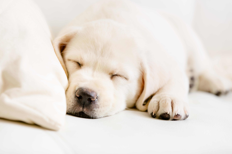 tips on how to sleep through the night